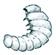 Bücherwurm (Holzwurmlarve)