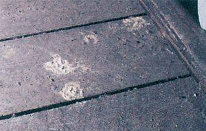 Bohrmehl von Holzwürmer auf Holzboden