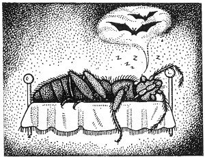 Die Herkunft der Bettwanze  war  bei der Fledermaus - Tierische Schädlinge in Haus und Lager - Seite 51