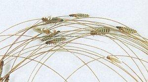Die Köpfe der Haarlinge sind breiter - Tierische Schädlinge in Haus und Lager - Seite 47