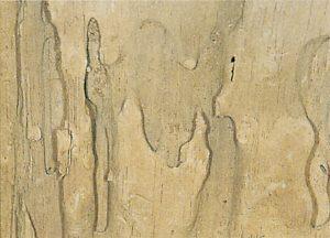 Morscher Holz als Nest für schwarzen Wegameisen