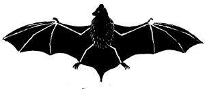 Schattenriss von Fledermaus