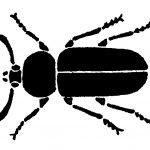 Schattenriss von Insekt