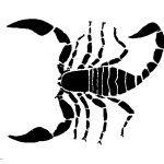 Schattenriss von Skorpionenkörper