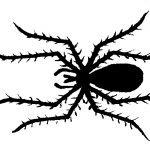 Schattenriss von Spinne