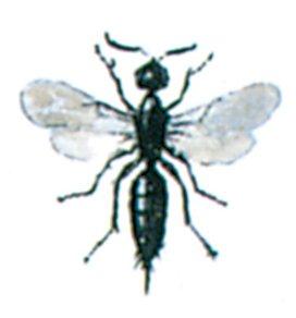Schlupfwespe - Tierische Schädlinge in Haus und Lager - Seite 57