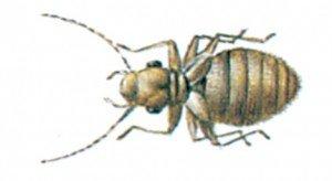 Staublaus - Tierische Schädlinge in Haus und Lager - Seite 69