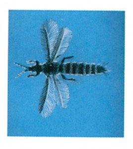 Thrips - Tierische Schädlinge in Haus und Lager - Seite 151