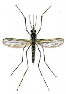 Waldmücke - Tierische Schädlinge in Haus und Lager - Seite 54