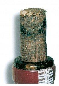 Weinkellermottelarven haben einen Korken genagt - Tierische Schädlinge in Haus und Lager - Seite 72
