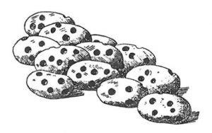Bohnen von Speisebohnenkäfern zerstört