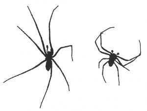 Hauswinkelspinnen mit acht Beine