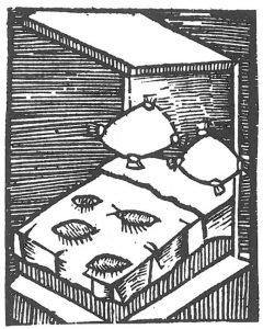 Holzschnitt von Plinius Menschenflöhe
