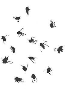Kriebelmücken
