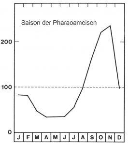 Saison der Pharaoameisen