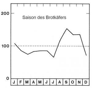 Saison des Brotkäfers