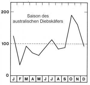 Saison des australischen Diebskäfers