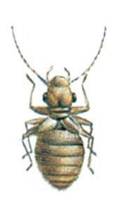 Staublaus