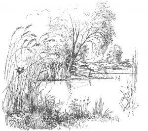 Wasserwanzen leben in ruhigem Wasser